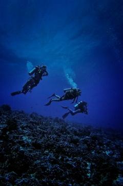 Rangiroa diving