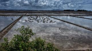 Cambodia salt field